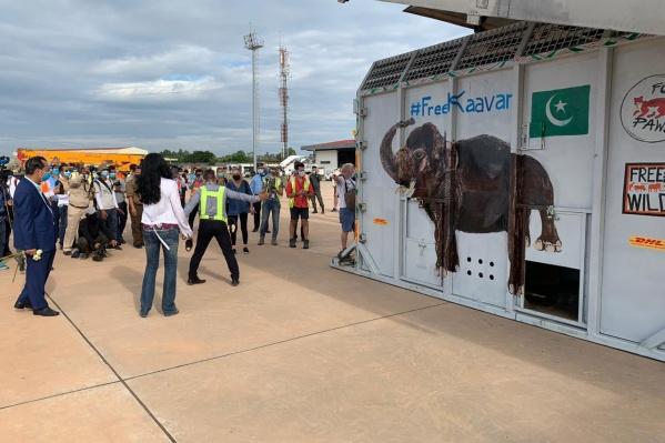 Слон летел в специальном контейнере