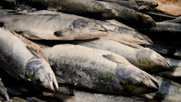 Инвестиции в горбушу: новосибирцы начали скупать замороженную рыбу вместо гречки