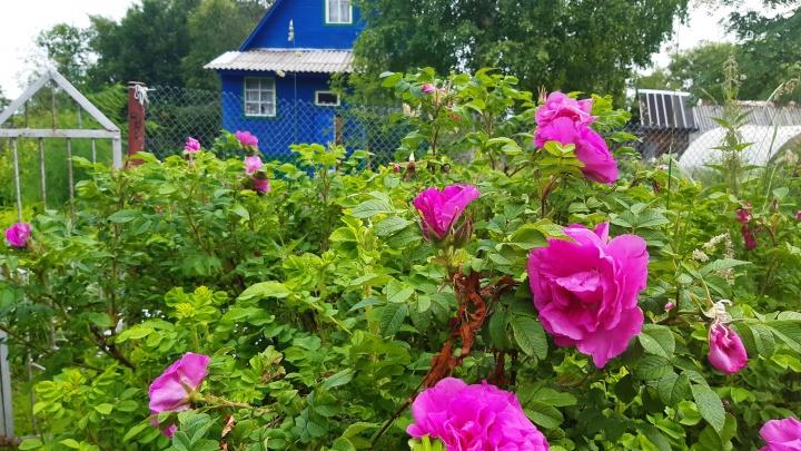 В Архангельской области вырос спрос на землю под частные дома