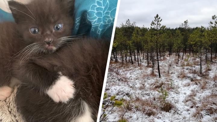 Котята родились, запахи вернулись, зимние куртки куплены: хорошие новости от читателей E1.RU