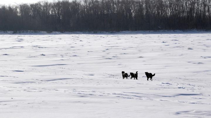 В Омске школьник провалился под лёд — его спас случайный прохожий
