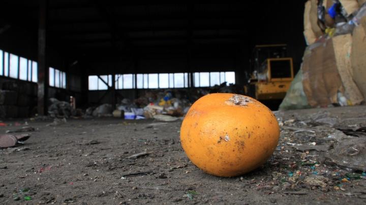 «Вместо свалки — плодородная земля»: экоактивист — о том, зачем Архангельску компостный ящик