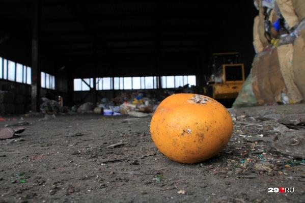 Вместо того чтобы отправлять пищевые отходы на свалку, где они гниют и выделяют парниковые газы, их можно использовать с большей пользой, считает Анастасия