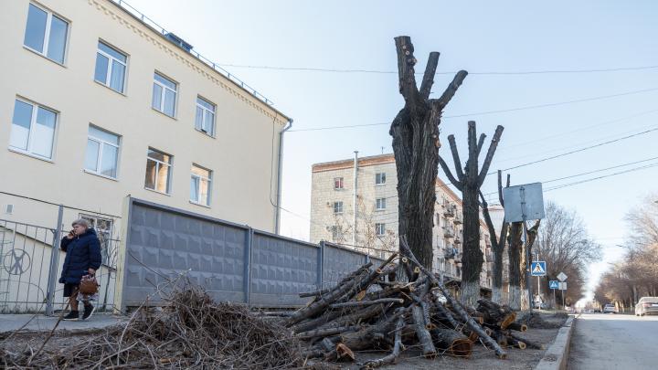 «Опять плохое напишете»: в центре Волгограда планово обрезают деревья