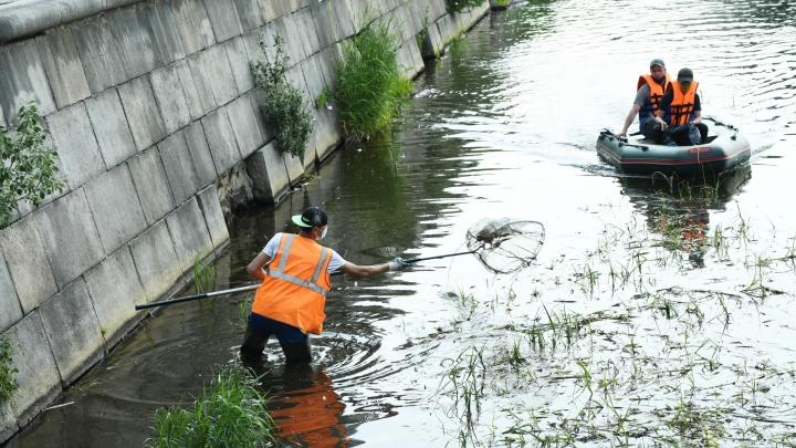 На Городском пруду появились люди с сачками, которые достают из воды мусор