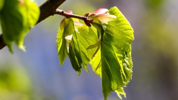 «Малиновое лето»: подробно о том, какая погода ждет нижегородцев в июне, июле и августе