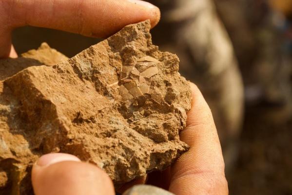 Ученые ведут раскопкив деревне Шестаково с середины прошлого века