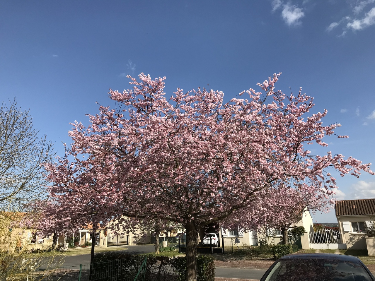 Во Франции все цветет, но улицы пусты. Смотреть на красоту можно только через забор