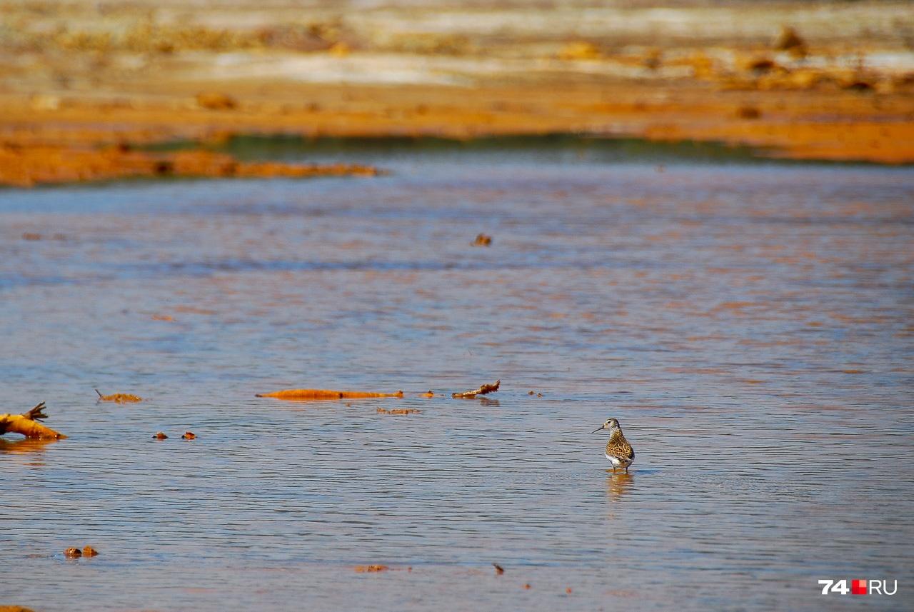 По задумке, мелководье пруда зарастёт камышами и прочими растениями, что повысит фильтрующую способность. Пока из живности — мелкие мушки и очень крикливые птицы