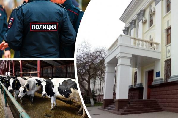 Коровы, которых везли через шесть регионов в Астрахань, пропали. Их ищет полиция