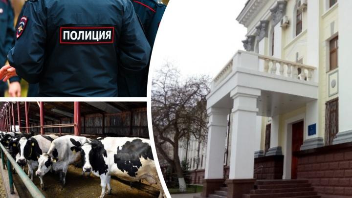 МВД приступило к поиску пропавших бруцеллезных коров из Тюменской области