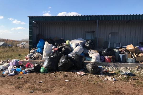 Возле мусорного контейнера появились собаки