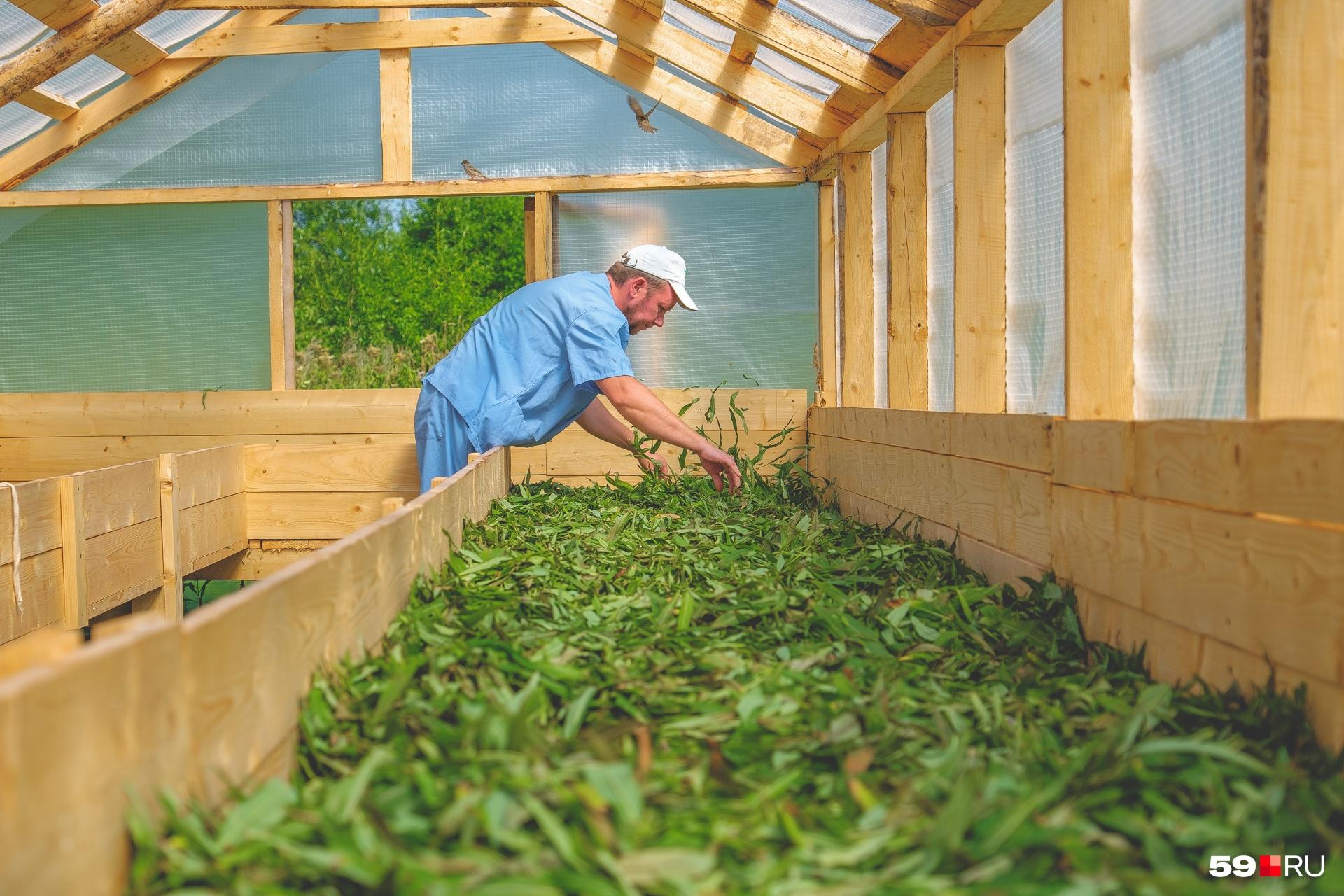 Вадим проверяет, можно ли убирать листья из сушилки