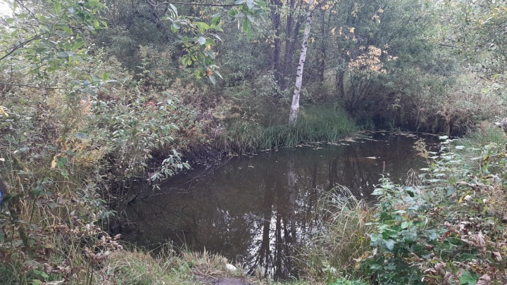 В Шенкурском районе в пруду утонул двухлетний мальчик. Заведено уголовное дело