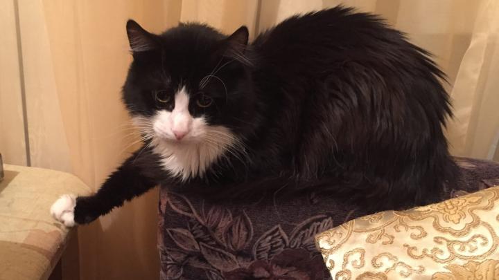 «Был весь в крови»: ярославцы спасли кота, застрявшего в форточке на 12-м этаже