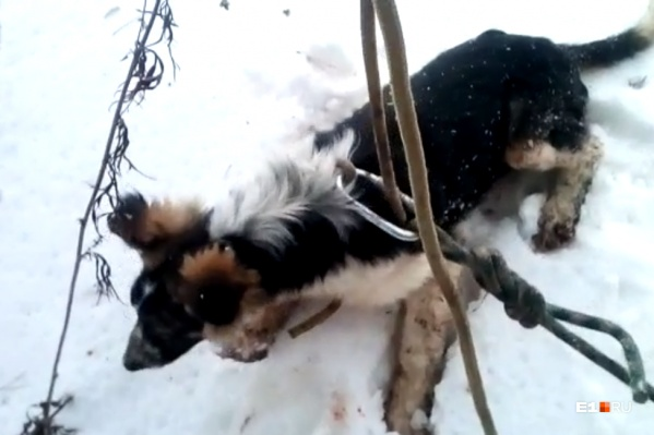 Собаку накормили и отпустили