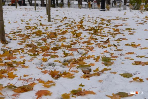 Аномальное потепление в Екатеринбурге сменят заморозки