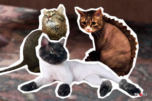 Не все уличные коты выглядят оборванцами