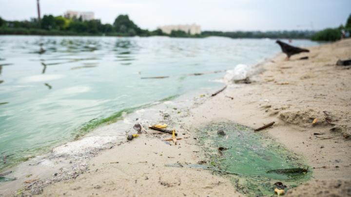 Темерник как сточная канава. Почему текущая через Ростов река стала самой грязной в области