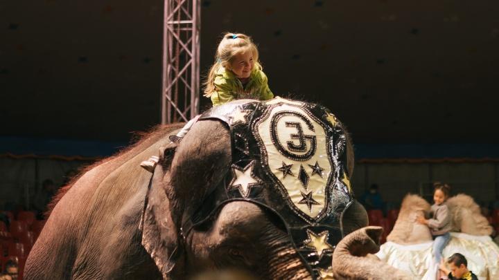 Самарцы смогли попасть за кулисы цирка «Шоу слонов»
