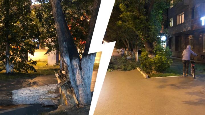В центре Тюмени старое дерево рухнуло на бабушку с внучкой