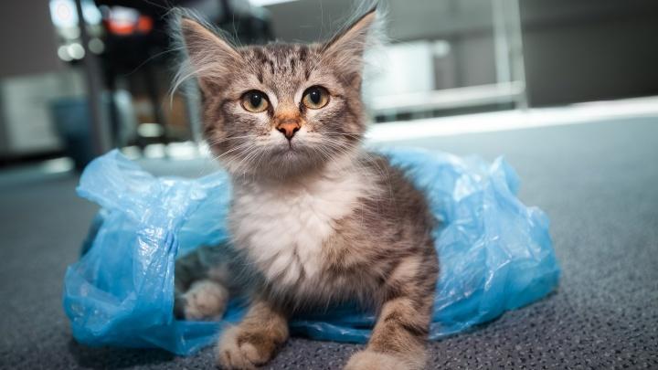Кузбассовец скинул котят с 5-го этажа. Суд наказал его за это