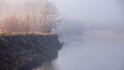 «Я специально охотилась за туманами»: фотограф показала невероятный осенний лес и ноябрьскую мглу