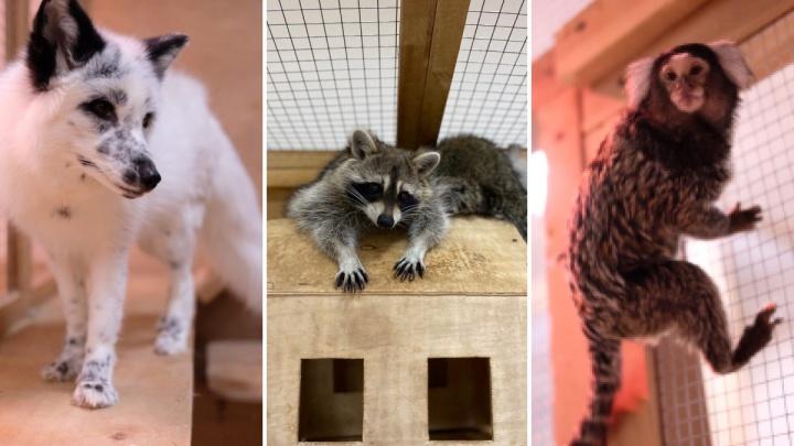 «От подсчета долгов опускаются руки»: как в пандемию выживает частный зоопарк в Красноярске