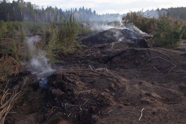 В Новосибирской области горит заказник «Сузунский»