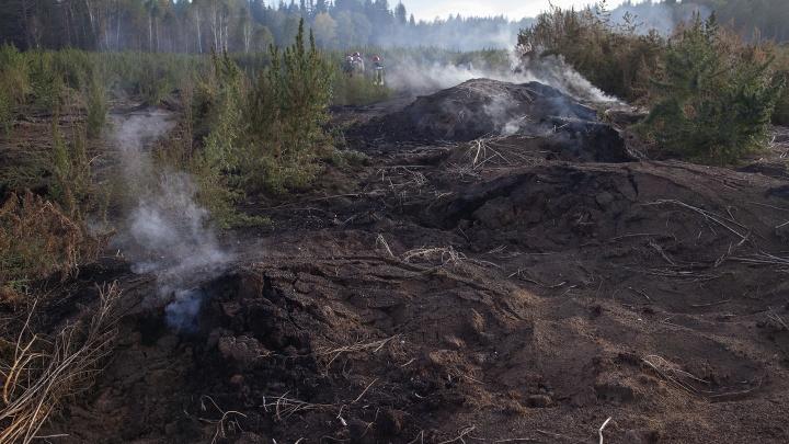 Под Новосибирском горит бор с 200-летними соснами. Добровольный пожарный — о том, как пожар не замечает власть
