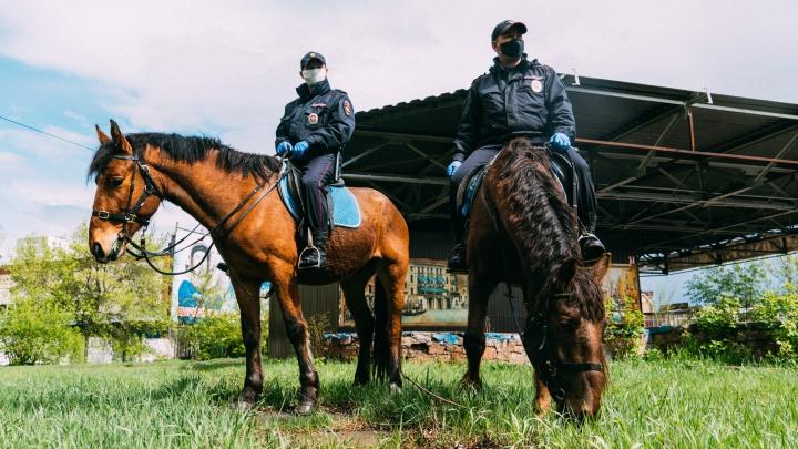 Кавалерия XXI века: как работает конная полиция во время режима самоизоляции