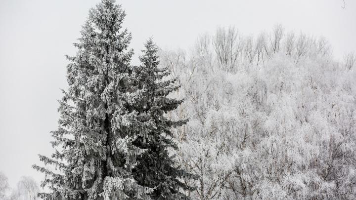 В Новосибирске резко испортится погода — горожан предупредили о надвигающихся морозах