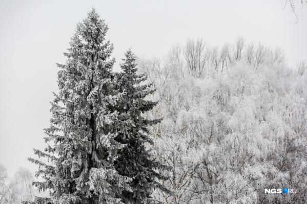 Ближайшие дни будут холодными и не сильно снежными