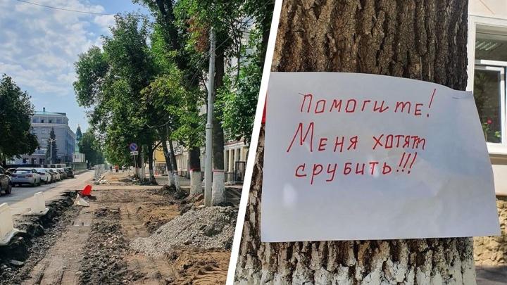 Уфимцы требуют остановить вырубку деревьев на Советской площади