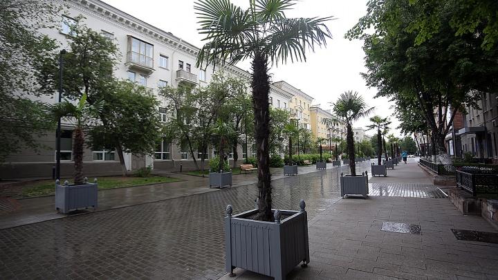 Лето пришло: на улицы Красноярска возвращают пальмы и туи