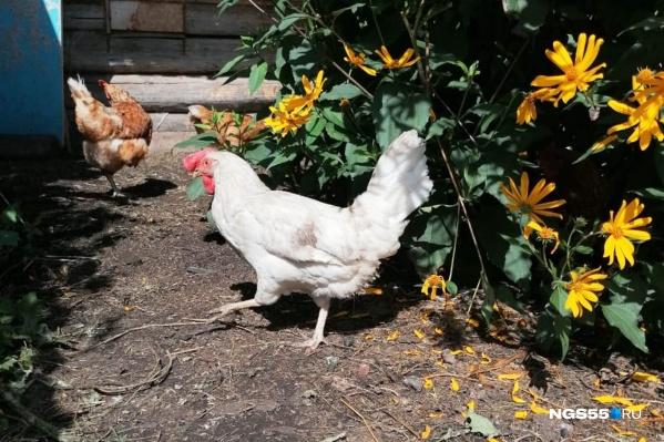 За каждый килограмм убитой курицы будут платить 149 рублей