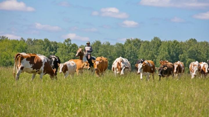 Красноярским фермерам выделили 12 миллионов на развитие туризма в сельской местности