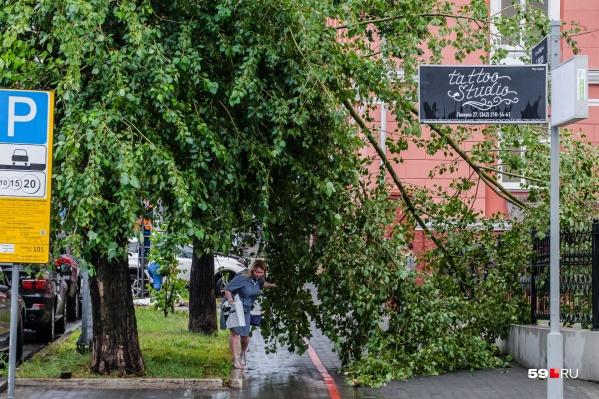 Под деревьями во время сильного ветра спасатели ходить не советуют