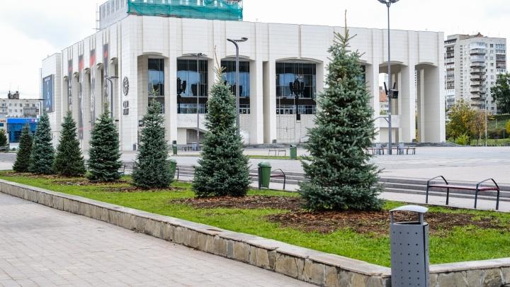 На площади у Театра-Театра высадили голубые ели. Фото
