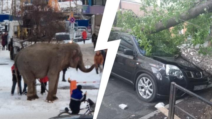 Сбежавшие слоны, «пьяный» автобус, сносящий крыши ураган: 15 лучших видео 2020 года