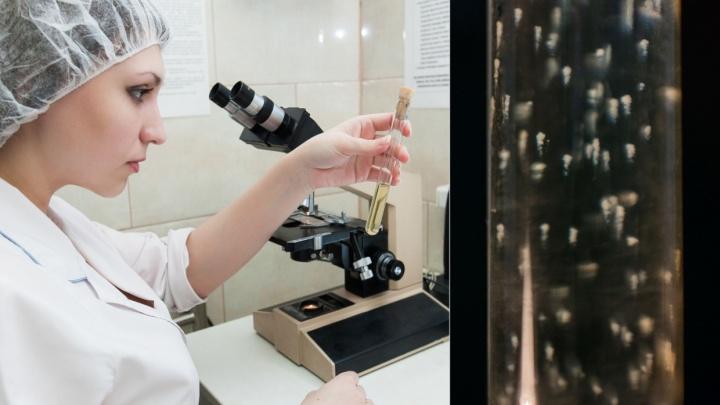«Этот способ известен более 30 лет и он хорошо работает»: микробиологи из Кольцово рассказали, как укрепить иммунитет