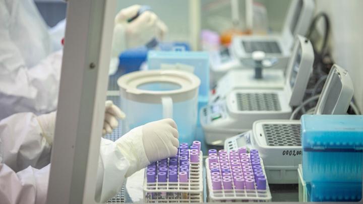 В НСО разрешили бесплатно тестировать всех родственников пациентов с ковидом