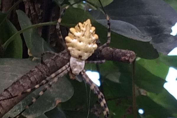 Странного паука нашли на даче под Ярославлем