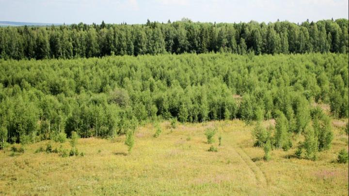 59-й меридиан и 59-я параллель пересекаются в Пермском крае. Что там находится?