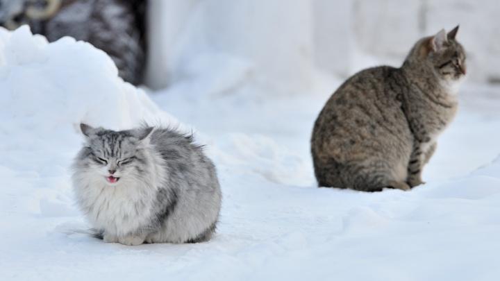 Держитесь, котики: в Свердловскую область пришли аномальные морозы, местами похолодает до минус40