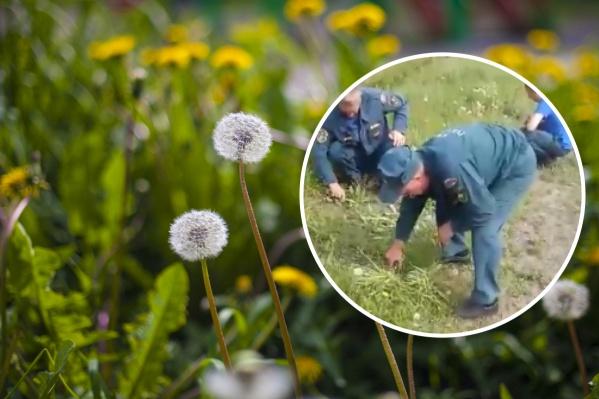 Пожарные стригли траву обычными ножницами, вместо того чтобы косить косой