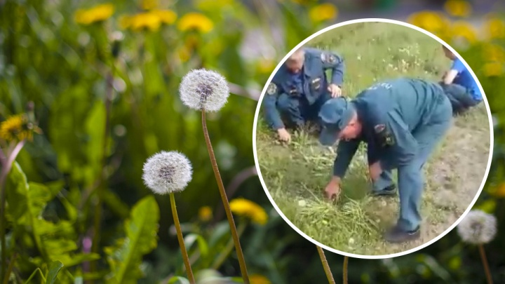 Под Новосибирском пожарных заставили косить траву маникюрными ножницами — они сняли это на видео