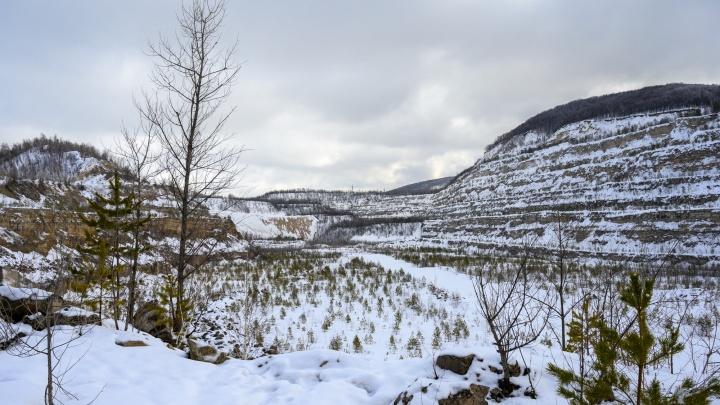 В нацпарке «Самарская Лука» нашли 9 трупов диких кабанов