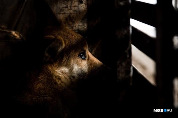 В ситуации с отловом бродячих собак в Челябинске полный мрак с самого начала 2020 года