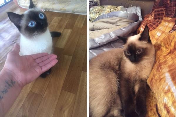 Кошку зовут Лилу